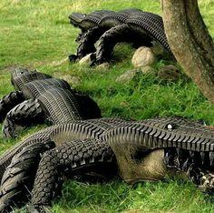 Tym razem stare #opony przerodziły się w straszne krokodyle!
