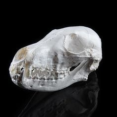 Resin Realistic Replica Animal Fox Skull Model Medical Party Prop Home Deco