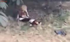 VEJA VÍDEO: tigre mata homem em zoológico chinês