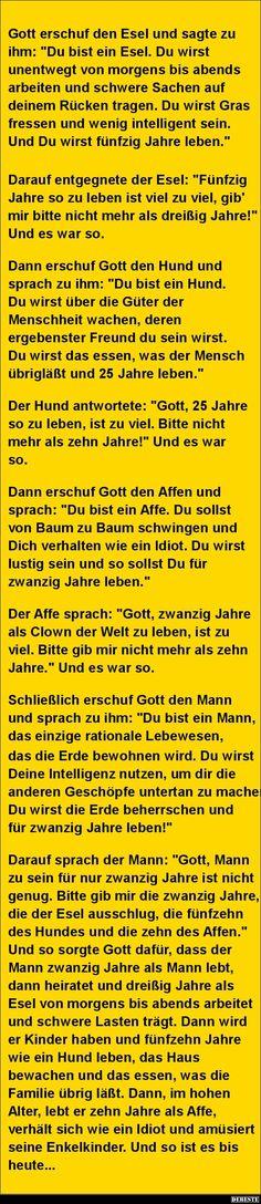 Gott erschuf den Esel und sagte zu ihm..   DEBESTE.de, Lustige Bilder, Sprüche, Witze und Videos