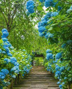 Beautiful Nature Wallpaper, Beautiful Landscapes, Beautiful Gardens, Beautiful Flowers, Beautiful Places To Visit, Wonderful Places, Hydrangea Garden, Hydrangeas, Exotic Plants