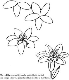 Simple flower pictures to draw how to draw a flower easy Teach me how to draw a flower