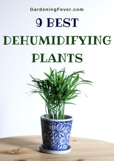 9 Best Dehumidifying Plants Gardening Fever 9 BEST DEHUMIDIFYING PLANTS Dehumidifying plants will always make you feel better and reduce the moisture Dehumidifier and ot. Best Indoor Plants, Cool Plants, Small Plants, Growing Plants, Growing Vegetables, Gardening For Beginners, Gardening Tips, Flower Gardening, Dehumidifiers