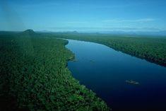 Amazonas, a maior floresta do mundo