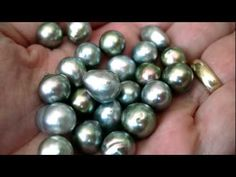 """the Sea of Cortez Pearls"" in Guaymas, Sonora, México ◘ VideoClip▶ Pearl Ring, Pearl Jewelry, Pearl Necklaces, Jewelry Box, Pearl Earrings, Jewellery, Tahitian Pearls, Cultured Pearls, San Carlos"