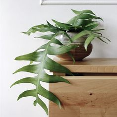 The Best Easy to Care For Indoor Plants Even Beginners Won't Kill We're all about plants here. Looking to become a plant mom? Geek out with me about cute planters, succulents, low maintenance plants, and plant tutorials on my board! Potted Plants, Garden Plants, Indoor Plants, Foliage Plants, Flowering House Plants, Indoor Ferns, Hanging Plants, Herb Garden, Cactus Flower