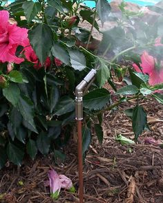 Mosquito Misting 101--Misting on Demand