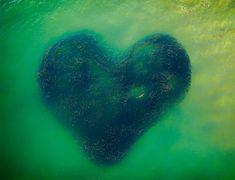 A linda imagem de um tubarão no centro de um cardume em forma de coração - GreenMe Brasil Photography Contests, Photography Awards, Aerial Photography, Vogue Photography, Wildlife Photography, Kuala Lumpur, Phoenix Rising, Drones, Fotografia Drone
