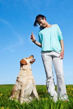 The Secrets of Training Dogs Are Now Revealed - training dogs needs you to get the suitable source that gives a detailed explanation to the techniques of treating dogs and controlling them - Dog trainer .