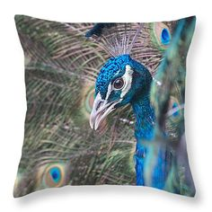 """Peacock Song Throw Pillow 14"""" x 14"""" $25 http://instaprints.com/products/peacock-song-marcela-martinez-throw-pillow-14-14.html"""