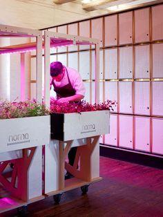 NOMA FoodLab in Copenhagen