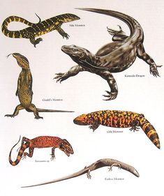 Nilo Monitor monstruo de Gila dragón de por mysunshinevintage