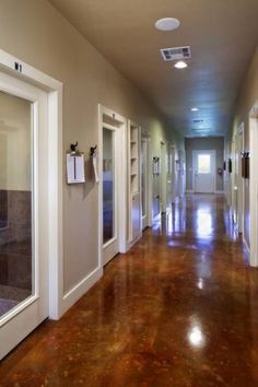 Like the stained concrete floor & how they made each kennel an individual room ---- this would be nice for cats, it would be unrealistic for dogs (in regards to cleaning)