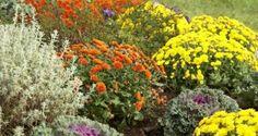 flores perennes de otoño