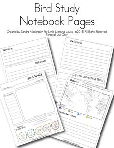Birds Worksheet Packet for 1st-3rd Graders