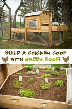 The roof of your chicken coop is a nice extra spot for growing plants!