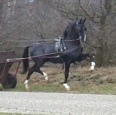 Ulandro v. Manno Dutch Harness Horse