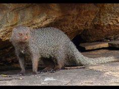 Ranebennur Blackbuck Sanctuary - in Karnataka, India
