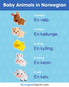 Learn how to say the names of your favourite BABY in French! These baby domestic animals are just as cute as their names and the words are super easy to remember and to identity!