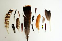 The Naturalist and His Muse - 8x10 Fine Art Photograph - A Collection of Feathers. $25.00, via Etsy.