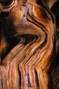 This texture of wood is like a river. Beautiful creature of nature. Wood Texture, Natural Texture, Tiles Texture, Texture Art, Patterns In Nature, Textures Patterns, Wood Sculpture, Sculptures, Bristlecone Pine
