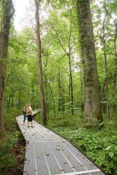 Big Oak Tree State Park in Missouri   VisitMO.com