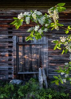 *🇫🇮 Spring flowers (Finland) by Asko Kuittenen Country Estate, Country Life, Country Living, Farm Shed, Growing Gardens, Summer Memories, Back Doors, Spring Flowers, Plants