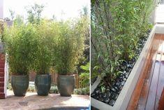 schwarzer Kies im Bambus-Kübel für gute Drainage