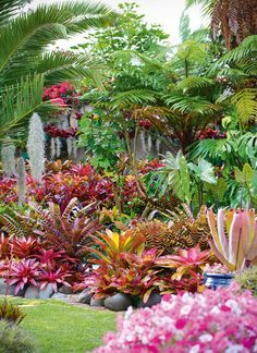 Thousands of jewel-like bromeliads radiate colour in this glowing suburban oasis.