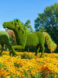 Horse topiary from Montreal Botanical Garden in Quebec, Canada, founded in 1931 Montreal Botanical Garden, Botanical Gardens, Botanical Art, Formal Gardens, Outdoor Gardens, Amazing Gardens, Beautiful Gardens, Beautiful Beautiful, Parks