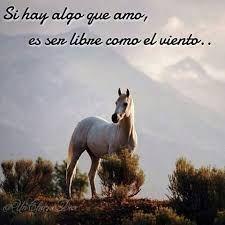 Resultado de imagen para imagenes de caballos con frases de amor