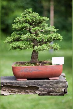 Bonsai – A Garden on the Desk Top | Cruzine
