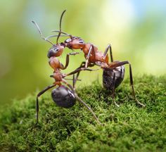 Photo about Two ants formica rufa, warm greetings. Image of ants, nature, friendship - 21185458 Photo Macro, Ant Colony, Micro Photography, Fotografia Macro, Creative Photos, Fantasy World, Fairy Tales, The Incredibles, Illustration