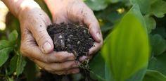 Fertilizante orgânico não é só esterco: conheça os tipos e veja como usar