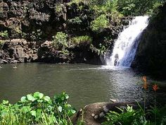 Waimea Falls Oahu, HI - Loved swimming here, so peaceful!