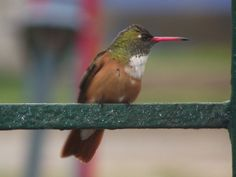 One of my best pictures, hummingbird. Trujillo, Peru