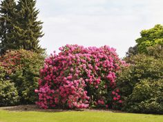 How to pick the right landscaping shrubs >> http://www.hgtv.com/landscaping/how-to-pick-landscaping-shrubs/pictures/page-2.html?soc=pinterest