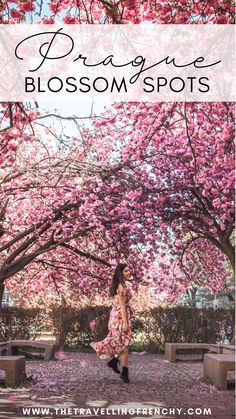 Top Cherry Blossoms Locations in Prague, Czech Republic. Where to see the blooming trees in Prague during Spring. Spring Photography in Prague Europe Travel Tips, Budget Travel, Travel Ideas, Travel Guide, Travel Destinations, Day Trips From Prague, Beach Trip, Beach Travel, Europe Beaches