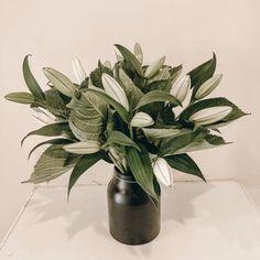 Florist, New Zealand Vase, Plants, Home Decor, Decoration Home, Room Decor, Plant, Vases, Home Interior Design, Planets