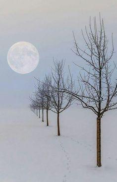 The quiet and stillness of winter