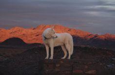 Mojave Desert, CA / December 2014 John and Wolf