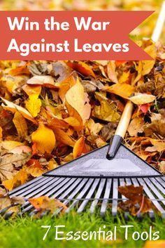 As long as you're armed with the right equipment, raking leaves doesn't need to be a backbreaking chore. These clever pieces of fall gardening gear can save you both time and effort.