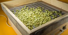 Ovens and dehydrators can be too aggressive when it comes to drying hops. You can easily build your own drying rack instead, and we'll show you how!