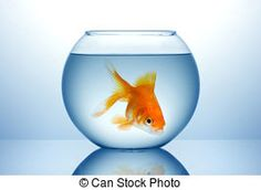 Fish bowl Stock Photos and Images. 16,733 Fish bowl pictures and ...
