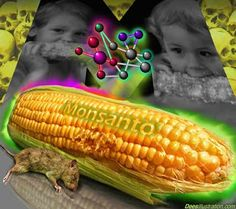 "If Monsanto's Roundup herbicide were actually 'safer than table salt' as they once advertised, the consumption of GM food wouldn't be nearly as controversial. The truth, however, is that virtually all GM food today contains residues of this toxic chemical, which disproves that GM and non-GM foods are ""substantially equivalent,"" which is the primary doctrinal justification behind why GM foods..."