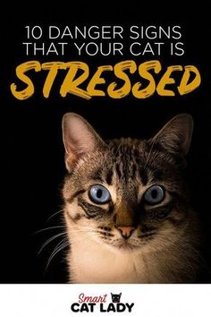 Cat Care Tips Is your cat acting strange? Here are 10 danger signs that your cat is stressed out that you can look for to make sure your cat is happy. I Love Cats, Cute Cats, Funny Cats, Funny Animals, Grumpy Cats, Rare Animals, Cat Care Tips, Pet Care, Pet Tips