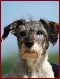 tierrecht anwalt wesenstest hund #hundehalter #haftung #hundebiss http://www.tierrecht-anwalt.de kostenlose Ersteinschätzung 06136 - 76 28 33