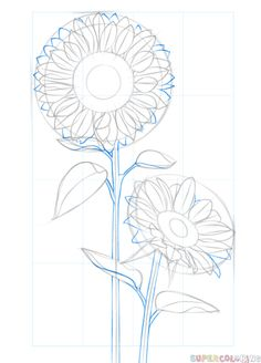 Flower Drawings Tutorial How to draw a sunflower step by step. Drawing tutorials for kids and beginners. Sunflower Sketches, Sunflower Illustration, Sunflower Drawing, Watercolor Sunflower, Flower Drawing Tutorials, Drawing Tutorials For Kids, Art Tutorials, Flower Drawings, Plant Drawing
