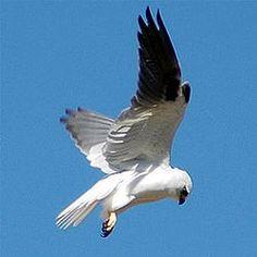 Afbeeldingsresultaat voor vogels in de lucht