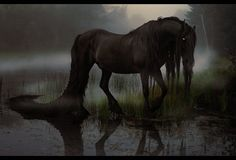 Magical Creature (Kelpie) This should be in a board for my novel Wolf and the Riddle; Ghosts of Excalibur, but how often do you see a Kelpie?